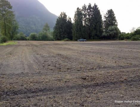 cedar tree farm field
